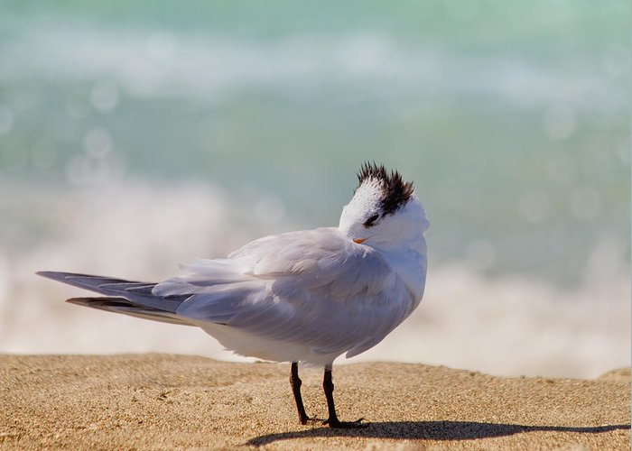 Tern Greeting Card featuring the photograph Resting At The Beach by Kim Hojnacki