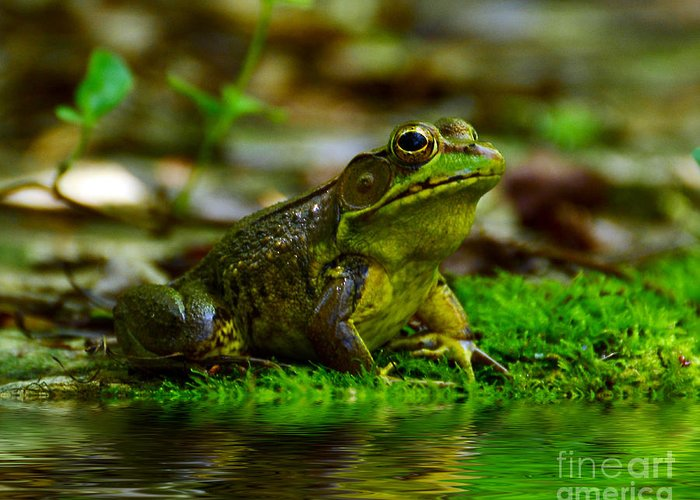 Frog Greeting Card featuring the photograph Resting In The Shade by Kathy Baccari