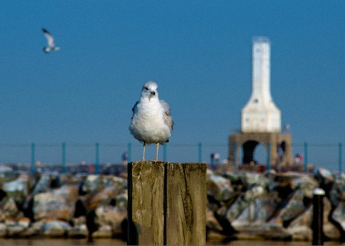 Seagull Greeting Card featuring the photograph Resting Spot by James Meyer