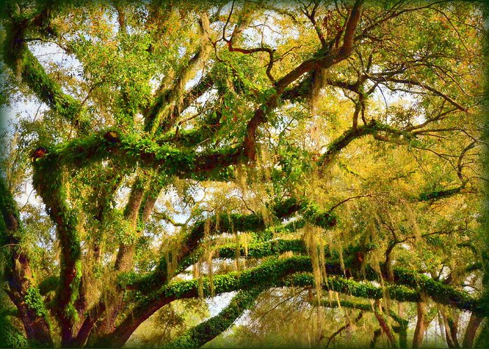 Resurrection Greeting Card featuring the photograph Resurrection Fern by Carla Parris