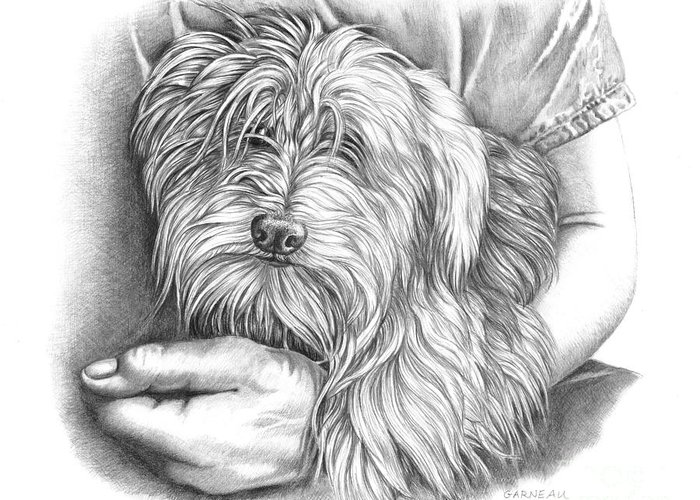 Toy Maltese Drawings Greeting Cards