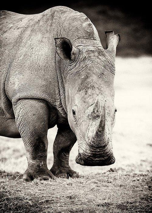 Rhinocerus Greeting Cards