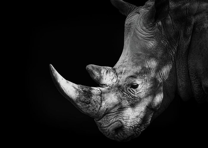 Horned Greeting Card featuring the photograph Rhinoceros by Malcolm Macgregor