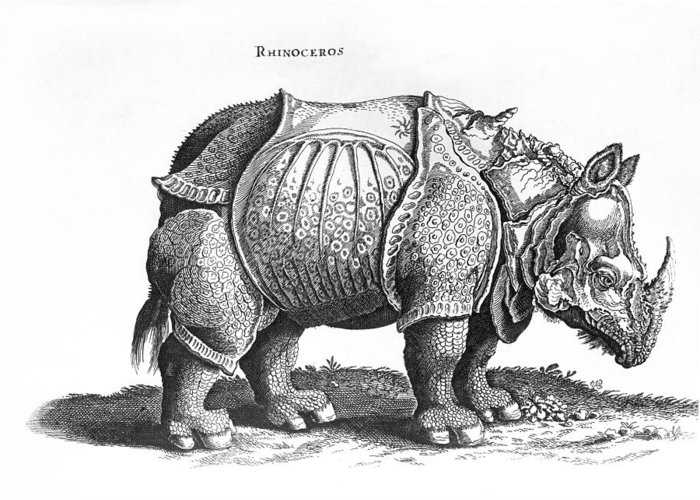 Rhino Greeting Card featuring the drawing Rhinoceros No 76 From Historia Animalium By Conrad Gesner by Albrecht Durer
