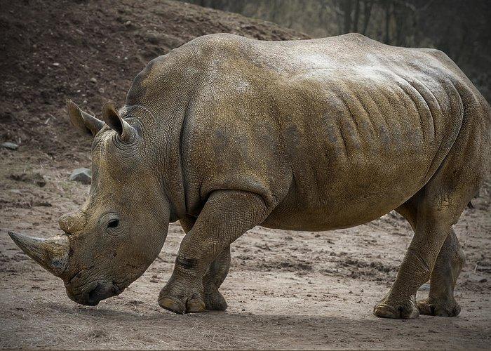 Rhinoceros Greeting Card featuring the photograph Rhinoceros by Svetlana Sewell