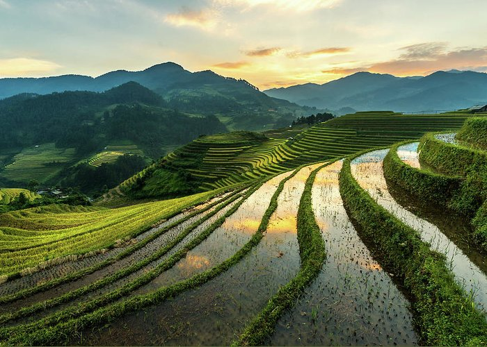Scenics Greeting Card featuring the photograph Rice Terraces At Mu Cang Chai, Vietnam by Chan Srithaweeporn