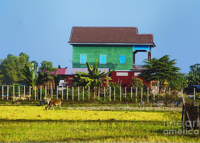 Cambodian Farmhouse Cambodia Fields And Farms Greeting Card featuring the photograph Rich Farm by Rick Bragan