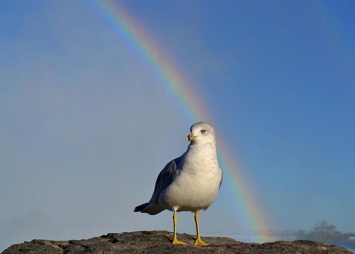 Rd Erickson Greeting Card featuring the photograph Ring Billed Seagull At Niagara Falls by rd Erickson