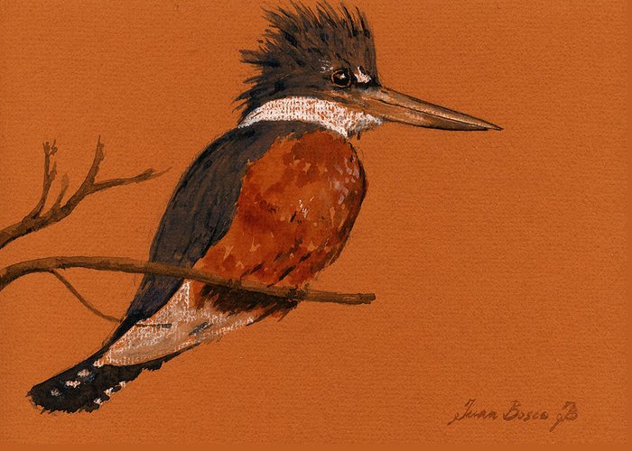 Kingfisher Greeting Cards