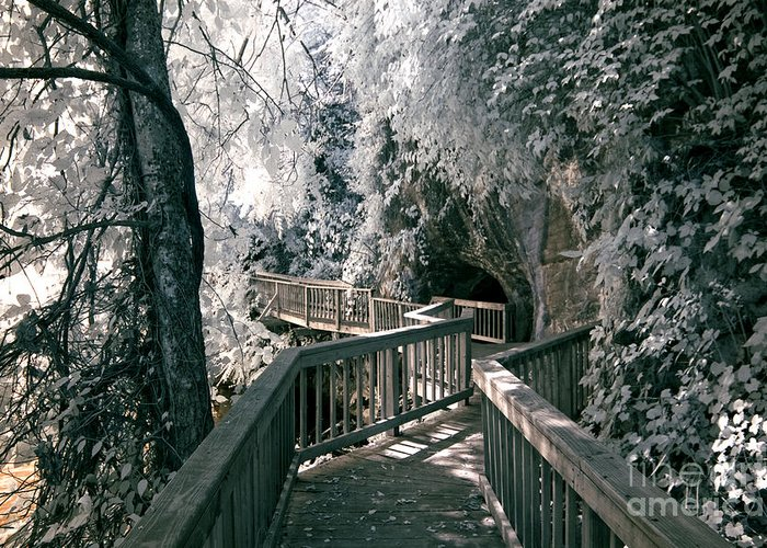 Infrared Greeting Card featuring the photograph River Boardwalk by Paul W Faust - Impressions of Light