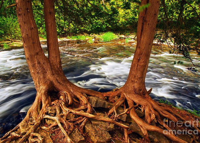 Water Greeting Card featuring the photograph River by Elena Elisseeva