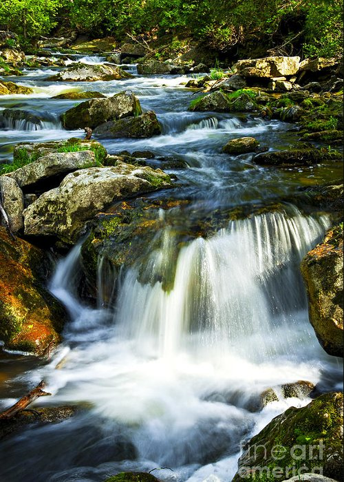 River Greeting Card featuring the photograph River Flowing Through Woods by Elena Elisseeva