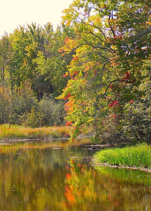 River Greeting Card featuring the photograph River In Fall by Rhonda Humphreys