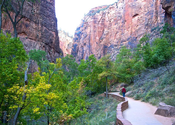 River Walk Greeting Card featuring the photograph River Walk In Zion Canyon In Zion Np-ut by Ruth Hager