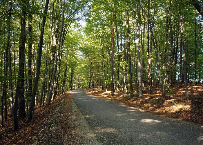 Asphalt Greeting Card featuring the photograph Road In Forest by Ioan Panaite