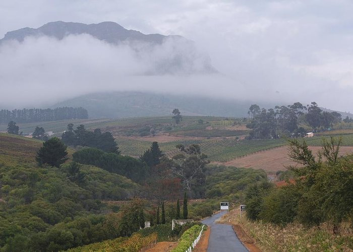 Africa Greeting Card featuring the photograph Road To Stellenbosch by Mark Beecher