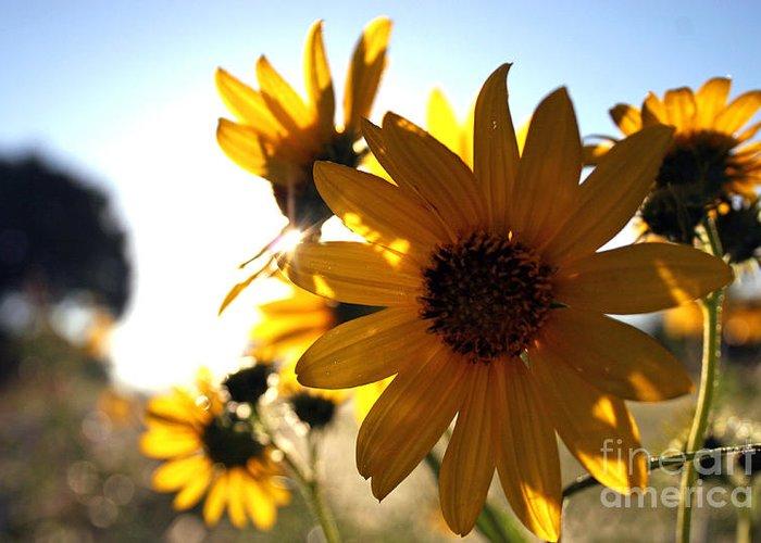 Morninglight Greeting Card featuring the photograph Roadside Sunshine by Martha Burton