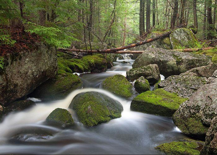 Maine Greeting Card featuring the photograph Roaring Brook by Patrick Downey