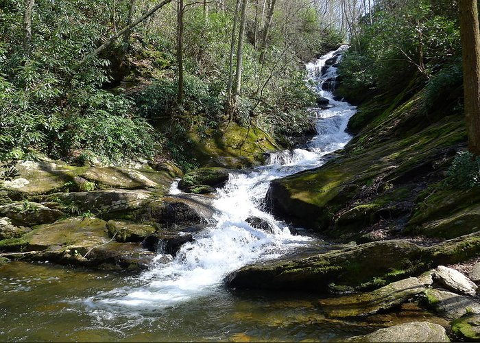 Pisgah National Forest Greeting Card featuring the photograph Roaring Fork Falls - Spring 2013 by Joel Deutsch