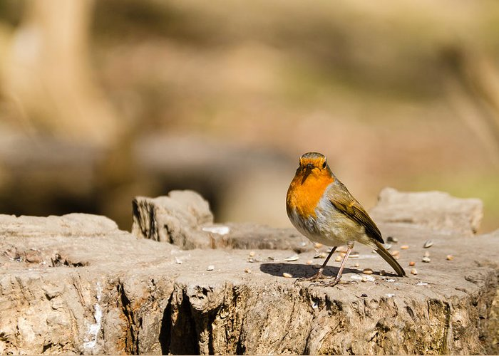 Animal Greeting Card featuring the photograph Robin In The Sun by David Head