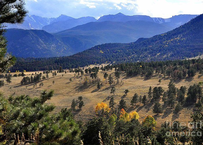 Nature Greeting Card featuring the photograph Rocky Mountain Evening by Nava Thompson