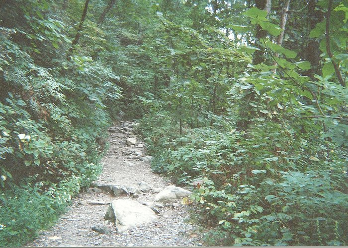 Trail Greeting Card featuring the photograph Rocky Path by Mark Nickel