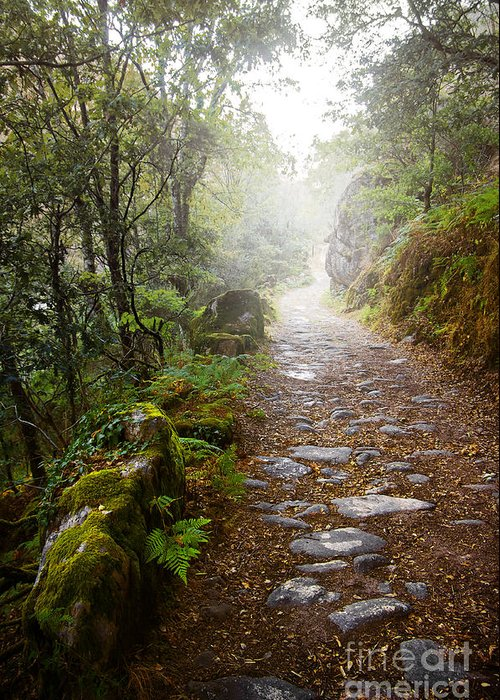 Rain Forests Greeting Cards