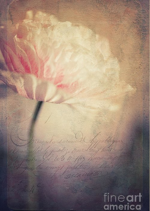 Poppy Greeting Card featuring the photograph Romance by Priska Wettstein