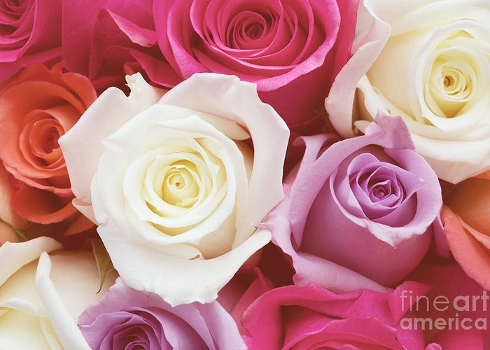 Romantic Flower Photo Greeting Card featuring the photograph Romantic Rose Garden by Kim Fearheiley