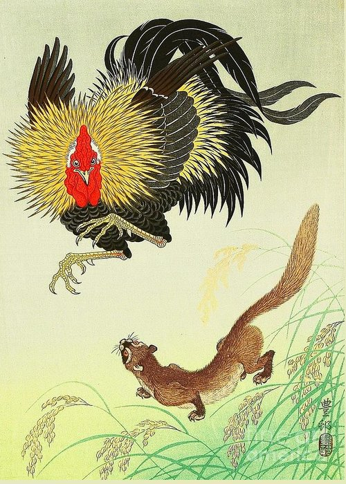 U.s.pd Greeting Card featuring the painting Rooster And Weasel by Pg Reproductions