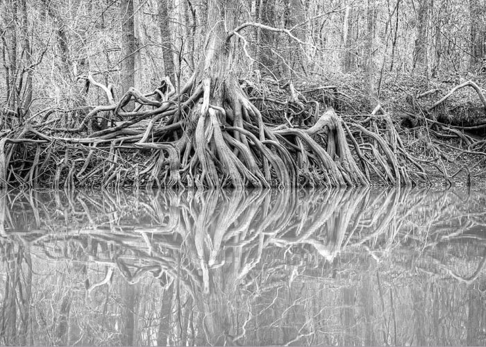 Roots Greeting Card featuring the photograph Rooted by Brian Gauger