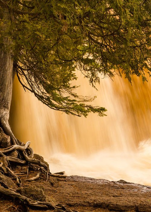 rooted In Spring mary Amerman Waterfall Cedar Tree Roots tree Roots gooseberry Falls lake Superior minnesota northern Minnesota Nature greeting Cards Spring spring Melt north Shore Powerful Humbling Beautiful nature Is Art may 1st 2013 Greeting Card featuring the photograph Rooted In Spring by Mary Amerman
