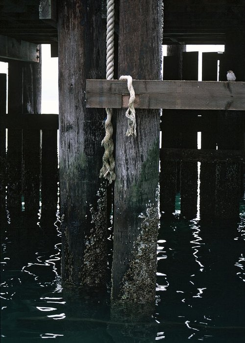 California Greeting Card featuring the photograph Rope On A Piling by Matt Swinden