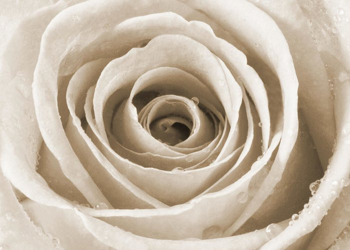 Dining Room Greeting Card featuring the photograph Rose With Water Droplets - Sepia by Natalie Kinnear