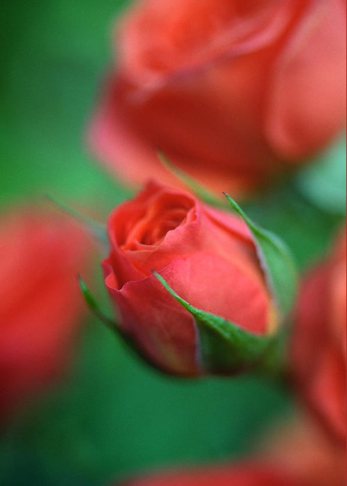 Florals Greeting Card featuring the photograph Rosebud by Kathy Yates