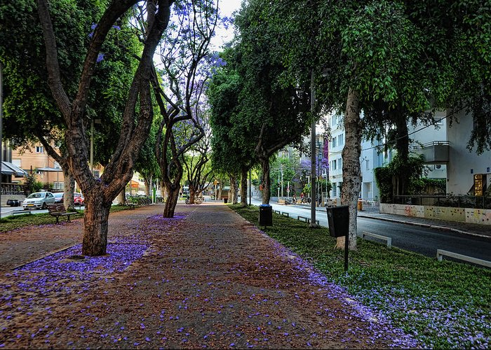 Foliage Greeting Card featuring the photograph Rothschild Boulevard by Ron Shoshani