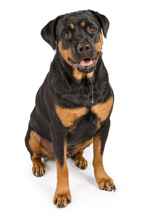 Dog Greeting Card featuring the photograph Rottweiler Dog With Drool by Susan Schmitz