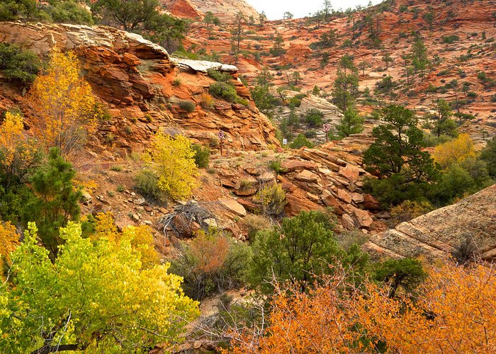 Rough Terrain Greeting Card featuring the photograph Rough Terrain In Autumn Along Zion-mount Carmel Highway In Zion Np-ut by Ruth Hager