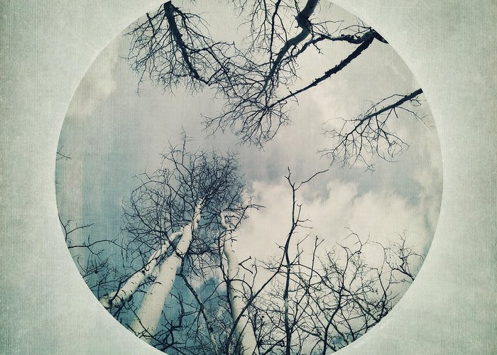 Vignette Greeting Card featuring the photograph round treetops II by Priska Wettstein