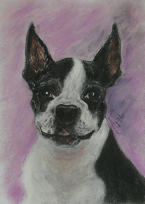 Boston Terrier Greeting Card featuring the drawing Roxy by Cori Solomon