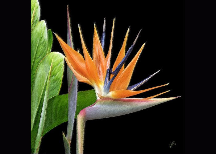 Tropical Flower Greeting Card featuring the photograph Royal Beauty I - Bird Of Paradise by Ben and Raisa Gertsberg