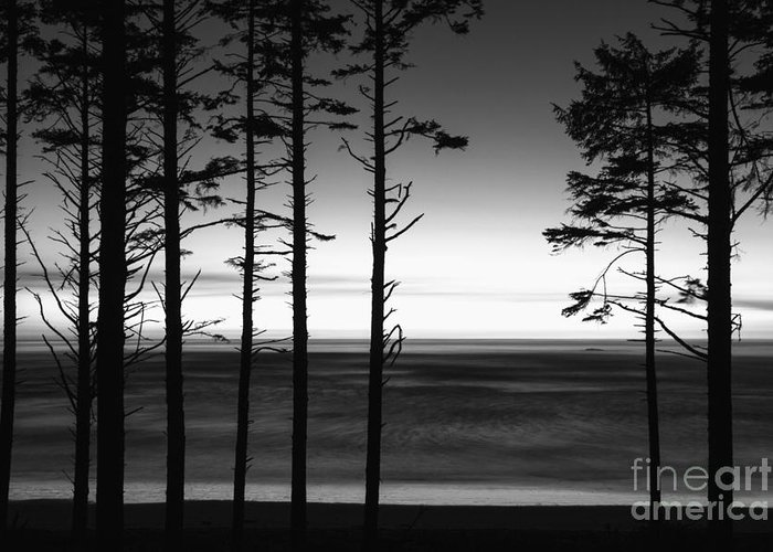 Ruby Beach Greeting Card featuring the photograph Ruby Beach Trees by Timothy Johnson