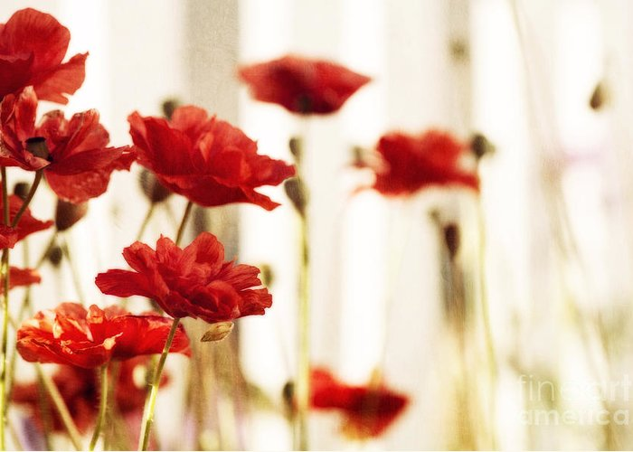Poppy Greeting Card featuring the photograph Ruby Reds by Priska Wettstein