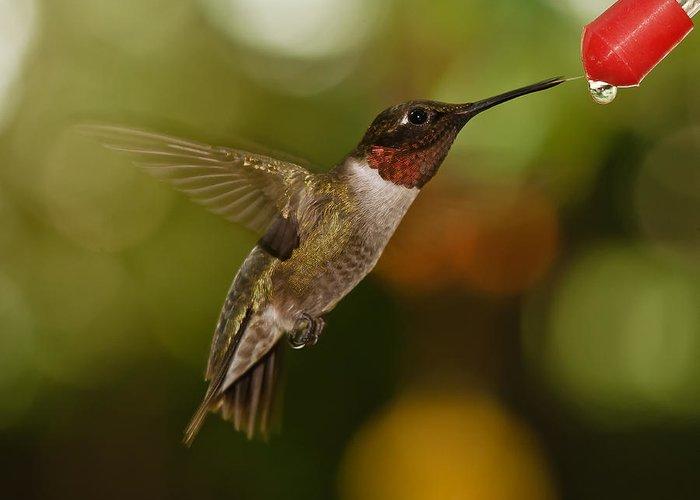 Ruby-throated Hummingbird Greeting Card featuring the photograph Ruby-throat Hummingbird by Robert L Jackson