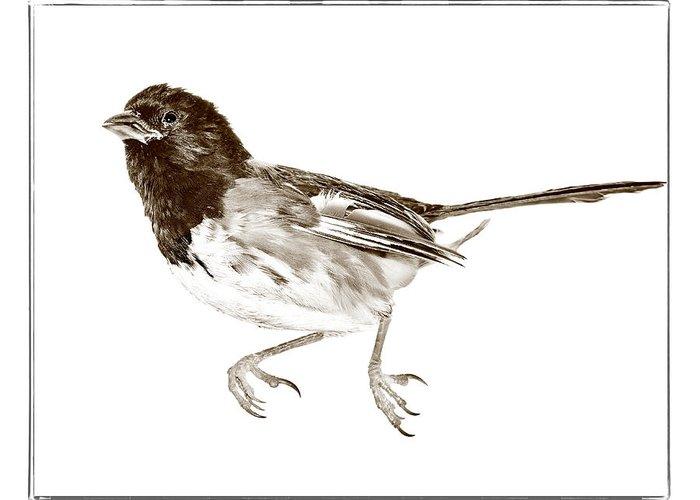 Animal Greeting Card featuring the photograph Running Bird by Susan Leggett
