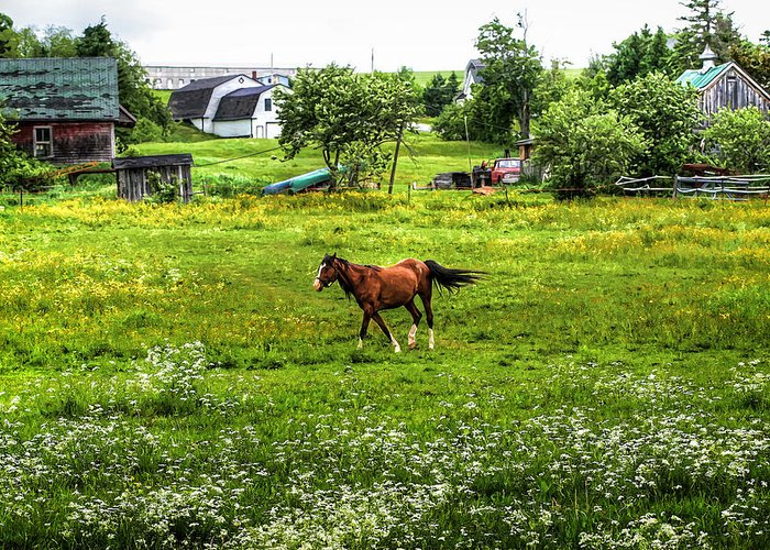 Horse Greeting Card featuring the photograph Running Free by Gary Smith