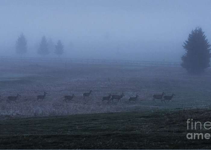 Foggy Morning Greeting Cards