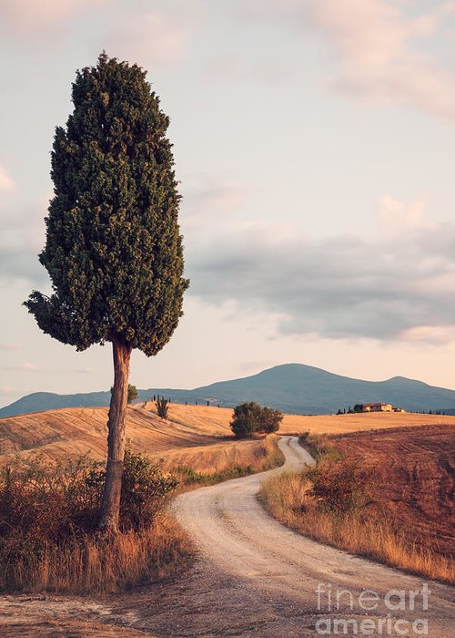 Farmhouse Greeting Card featuring the photograph Rural Road With Cypress Tree In Tuscany Italy by Matteo Colombo