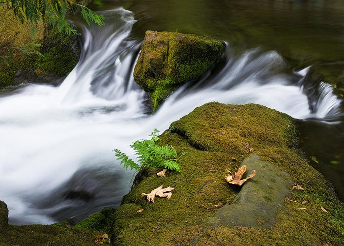 Landscape Greeting Card featuring the photograph Rushing Water At Whatcom Falls Park by Priya Ghose
