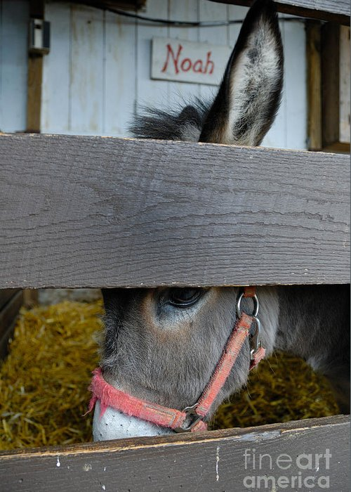 Ass Greeting Card featuring the photograph Sad Donkey by Amy Cicconi